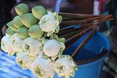 lotus-flowers-1574424_1280